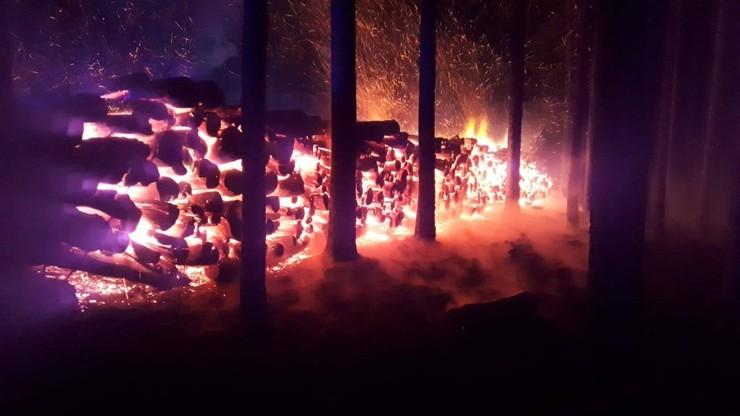 Podpalono drewno przygotowane do sprzedaży. Walka strażaków o uratowanie lasu